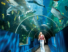Tunnel/ Great Barrier Reef display