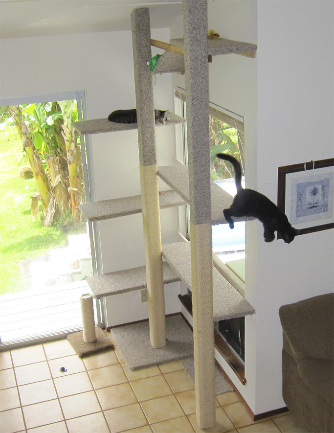 Rope Shelves Cat Trees: Cat climbing pole floor to ceiling. Diy wall ...