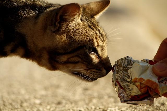 Sniff...?