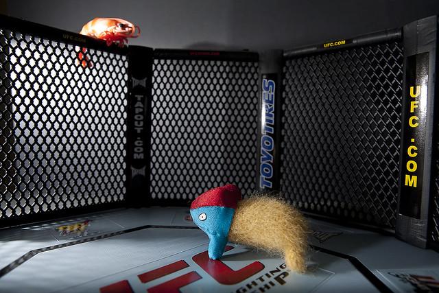 UFC Lightweight Matchup