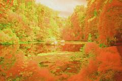 The Enchanted Pool-2