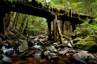 Historic Tramline - Montezuma Falls Track, Tasmania