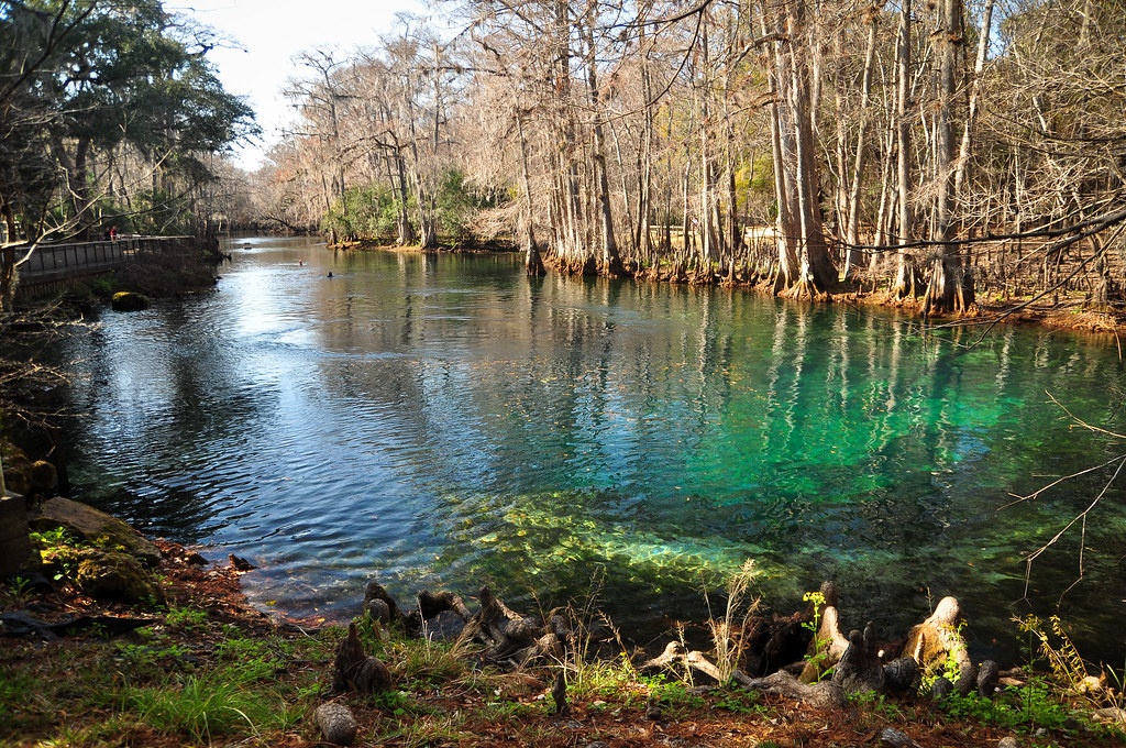 Manatee Springs State Park Florida Around Guides