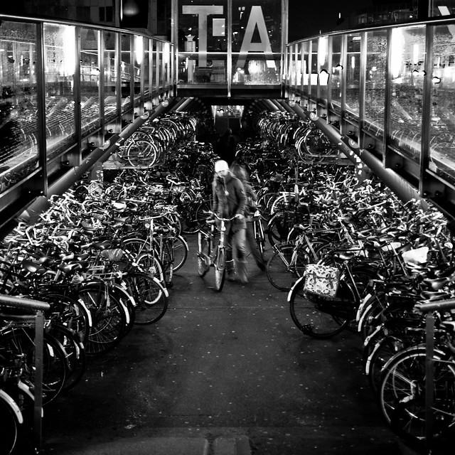 Among bicycles
