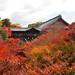2010 京都 秋:東福寺 紅葉海