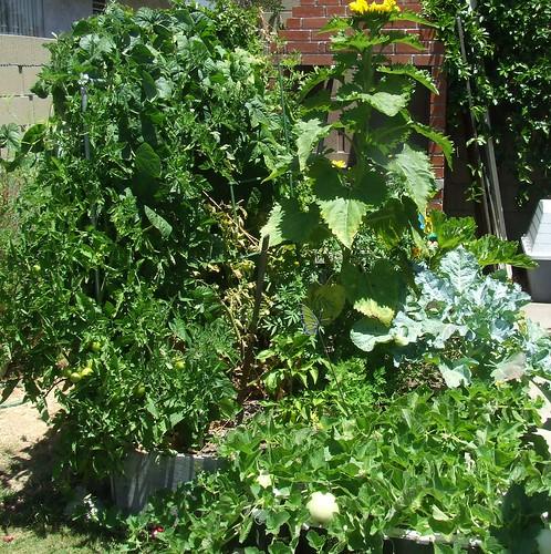 square foot garden 2009