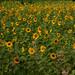 Quinta flower comunitária ;) by Michele Nobrega