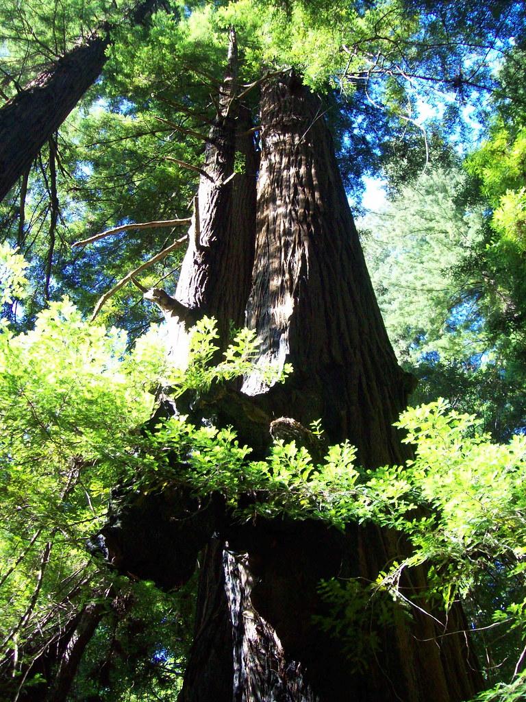 Richardson Grove State Park Map Humboldt County