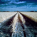 White agriculture by Fabrizio Zago - Photography and media