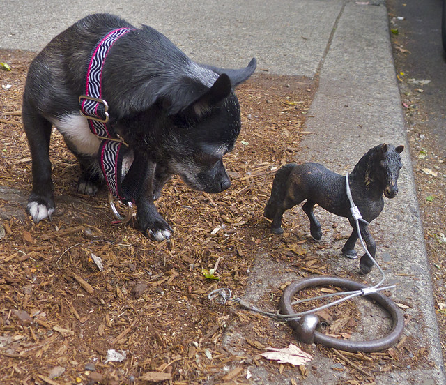 The smallest horse in the world ever - photo#5