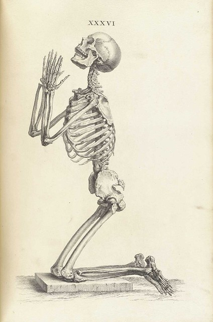William Cheselden\'s Osteographia (1733) – The Public Domain Review