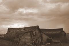 Lindisfarne, Aug 2011