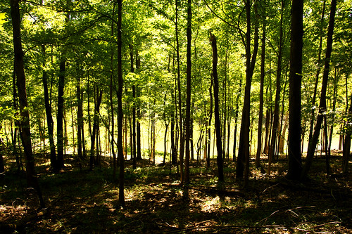 wood trees ohio sun sunlight lake water grass leaves outside shadows eastforkstatepark