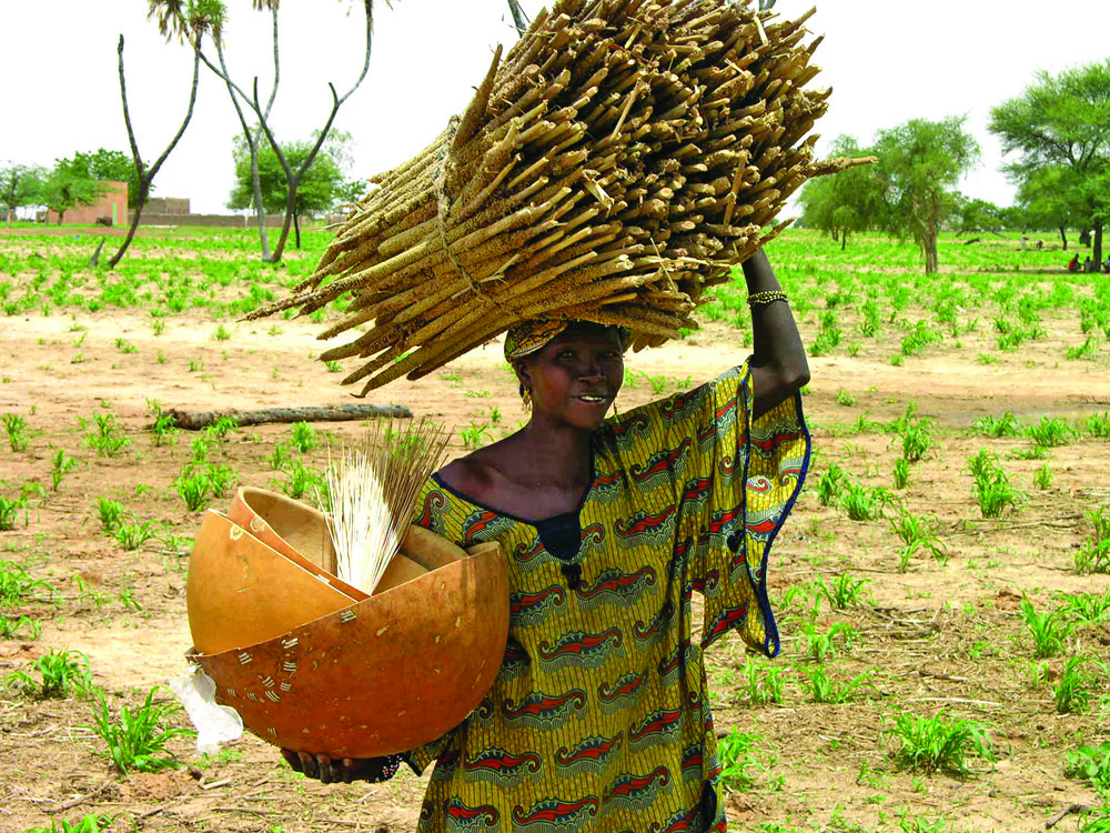 Which of the following is a cash crop grown in the Sahel