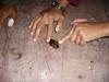 Leaf-cockroach P1000117