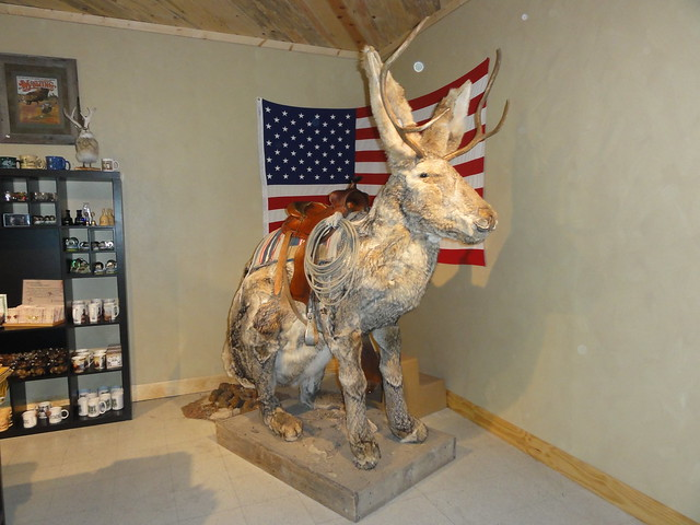 The giant stuffed jackalope | Flickr - Photo Sharing!