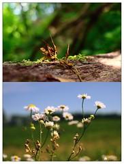 Természet / Nature