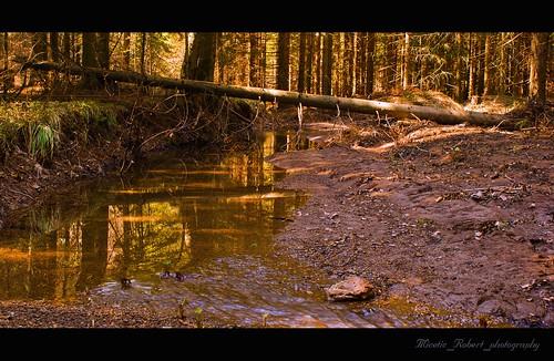 nature forest croatia landscope sonya200