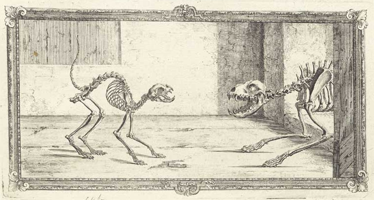Vesalius Cat And Dog