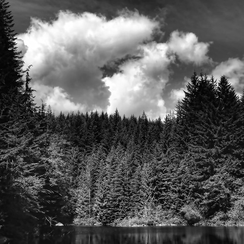 trees lake clouds forest landscape mono ricelake zedzap