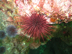 flower(0.0), invertebrate(0.0), coral reef(1.0), sea urchin(1.0), coral(1.0), echinoderm(1.0), marine biology(1.0), fauna(1.0), underwater(1.0), sea anemone(1.0),