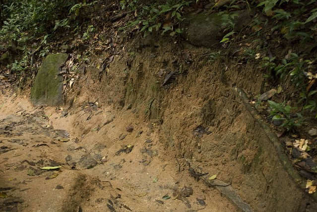 ImageSpace - Rainforest Soil | gmispace com