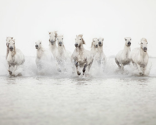 The power of 10 - Horse Photograph by IrenaS