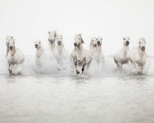 The power of 10 - Horse Photograph