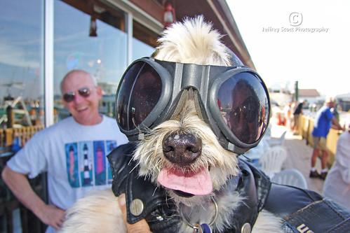 Harley Davidson Biker Dog