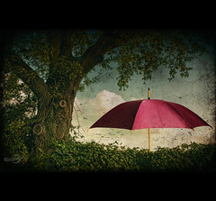 Tree & Umbrella