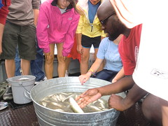 science summer course with Ohio Sea Grant and Stone Laboratory