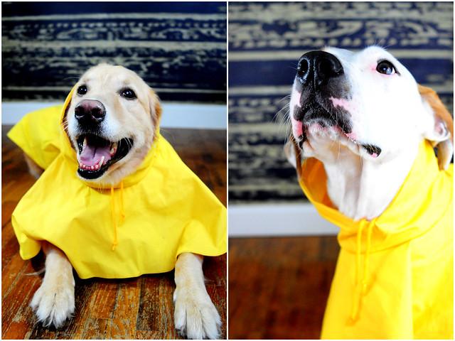 Day 321 raincoat (2)