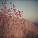 mountain flora by Ixchel Lara