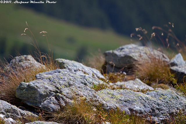 98/365 [365 Project] - Mountain Rocks by Stefano.Minella