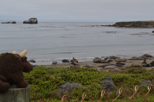 Buddy Watching Seals on Pacific Coast Highway, CA