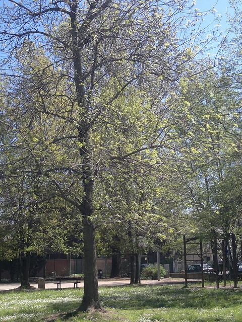 Parco delle Paulonie