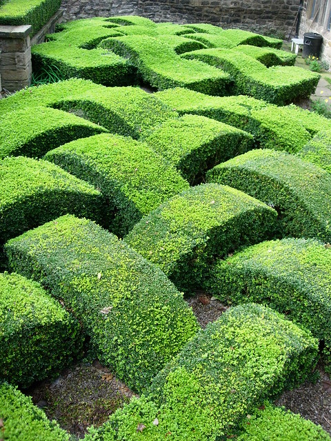 Decorative Box Hedge In Garden