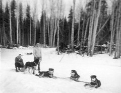 Dog Team In Anzac Alberta