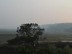 Smoke on the Marsh