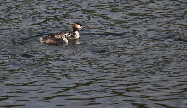 Funny looking ducks | Flickr - Photo Sharing!