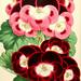 The Floral magazine. v.6