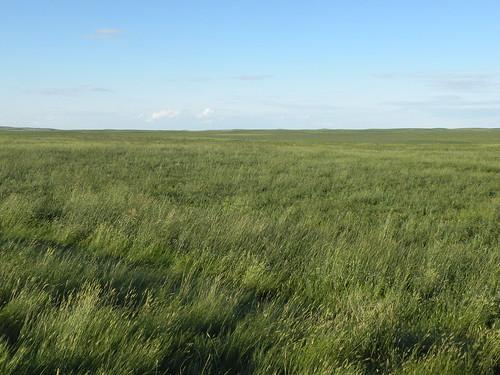 park nationalpark prairie saskatchewan grasslands grasslandsnationalpark vacation2011