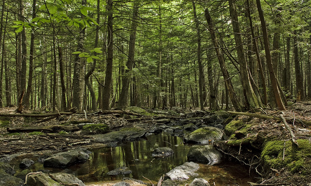 Cranberry Meadow Trail 2 by David Nelson on Flickr,  New Hampshire, August 13, 2011.