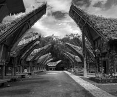 Traditional houses in Tana Toraja, Sulawesi
