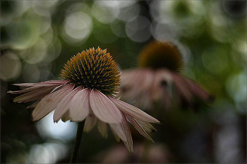 late summer bokeh 0067