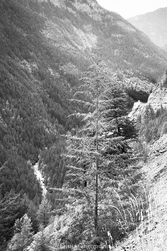 ca canada mountains tree river britishcolumbia columbiamountains lilooet gerbirge