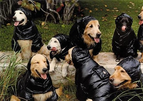 That is a lot of wet dog smell!