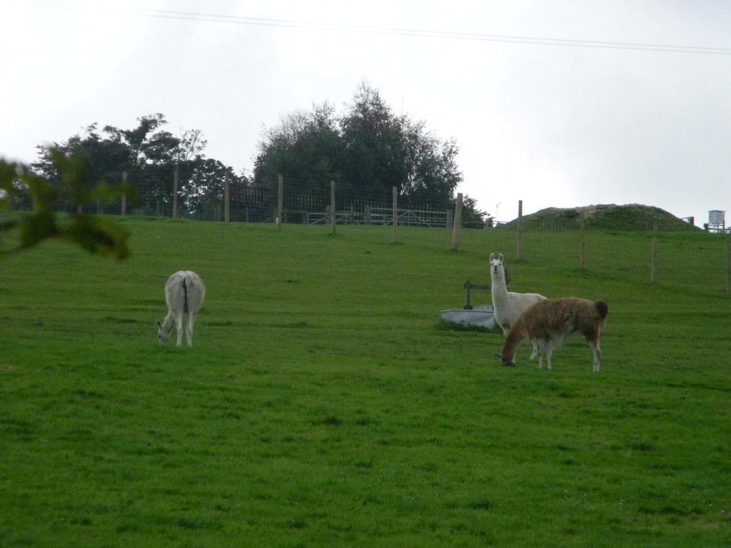 Llama Park Forest Row Circular
