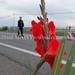 Nucleaire Japon : Minamisoma, ville fantome