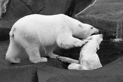 Riverbanks Zoo - ca. 1978